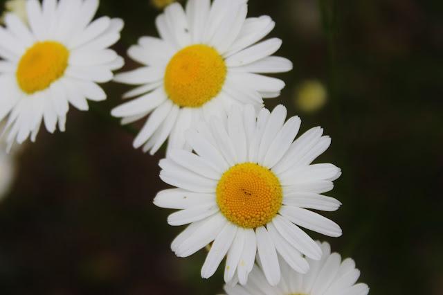 vaihtariblogi usa kukka valokuvaaminen canon eos 600d vaihto-oppilas explorius