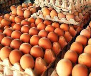 jual-telur-ayam