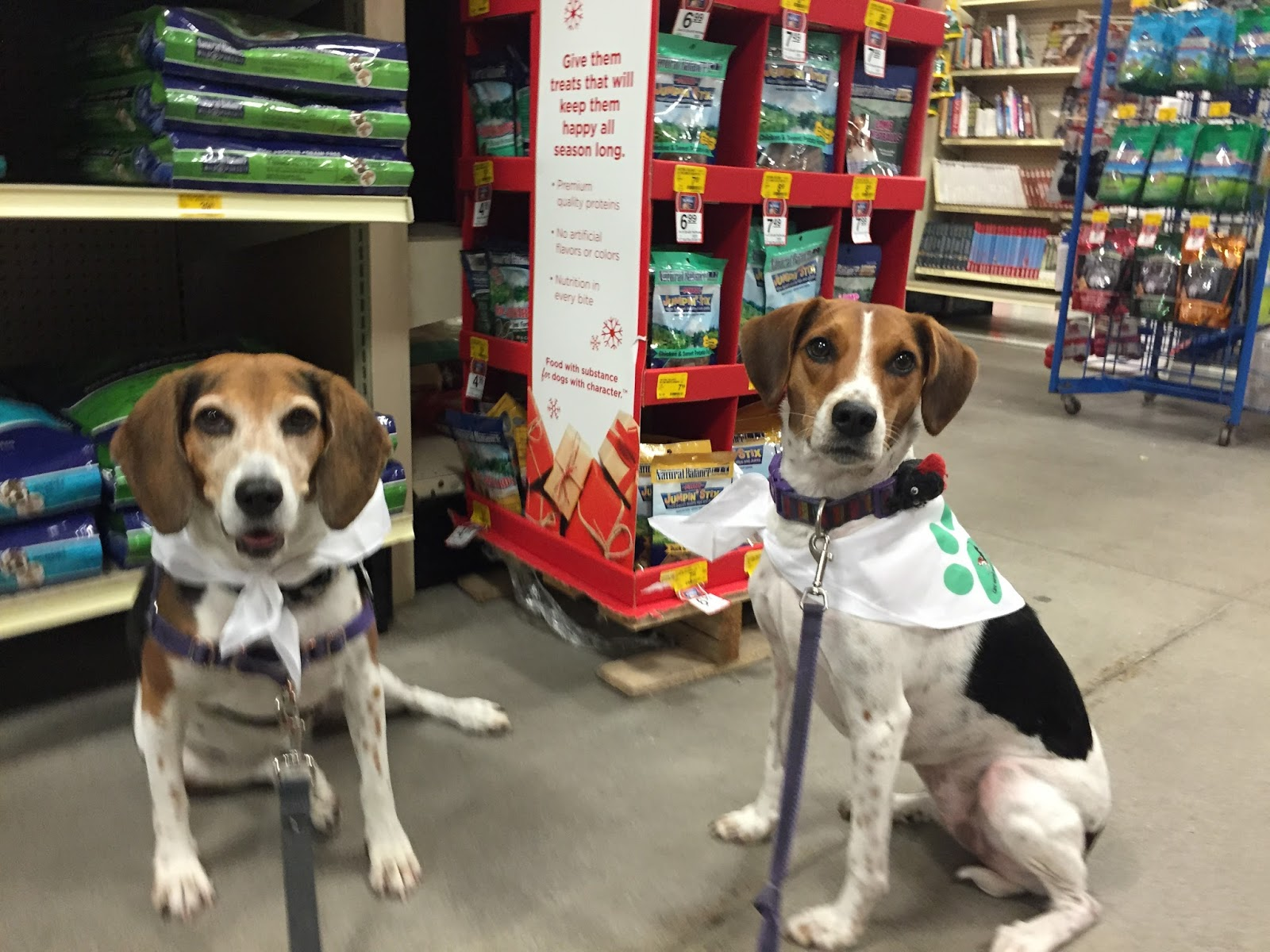 A Beagles Diet Life With Beagl...