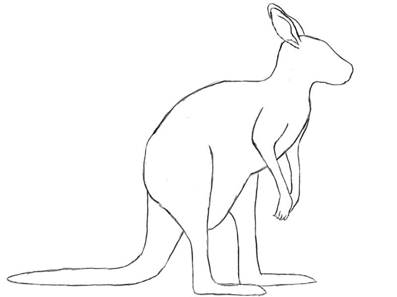Line Art Kangaroo : How to draw a kangaroo central