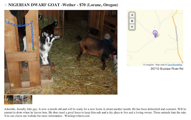 http://eugene.craigslist.org/search/?sort=rel&areaID=94&subAreaID=&query=goat&catAbb=sss