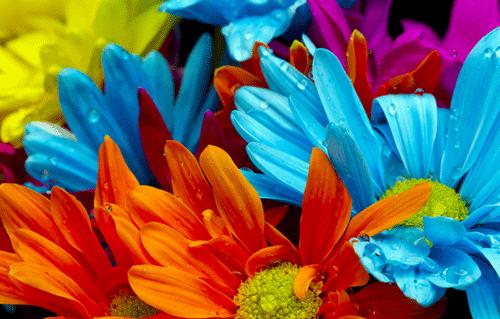 margaritas de color