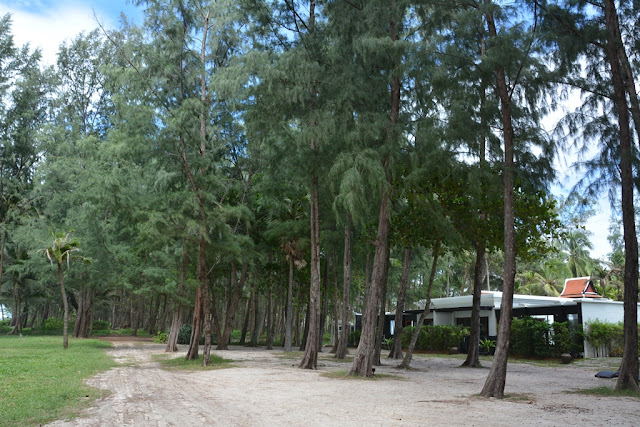 Mai Khao Beach trees