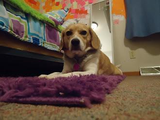 My Little Pup