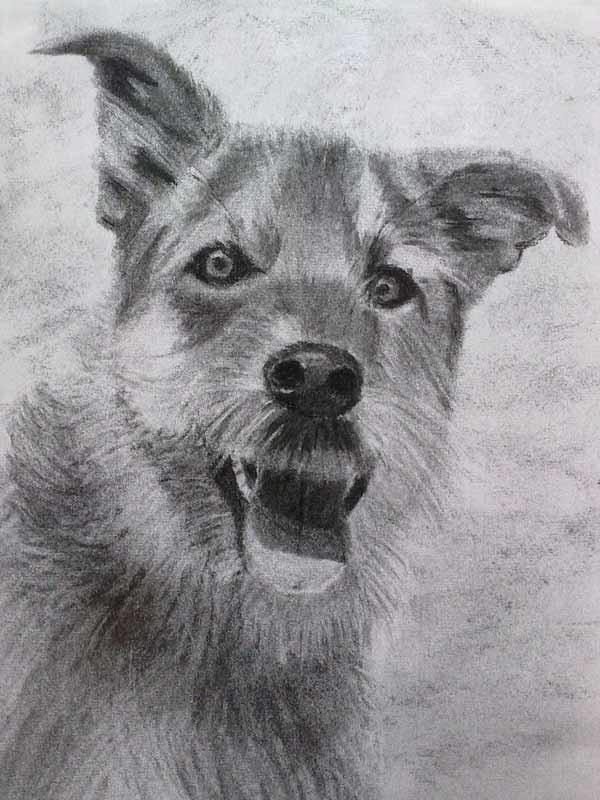 cabeza de perro con carboncillo