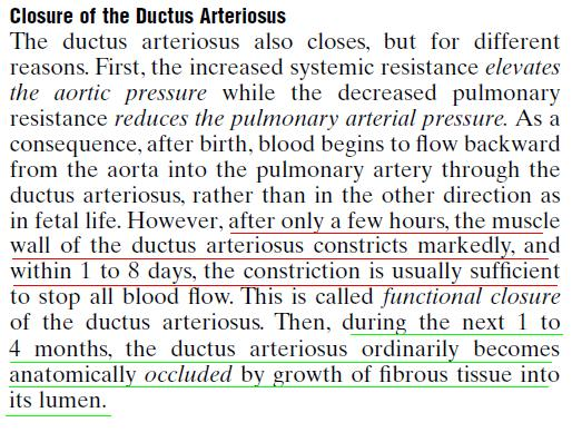 Mediconotebook Physiological And Anatomical Closure Of Ductus