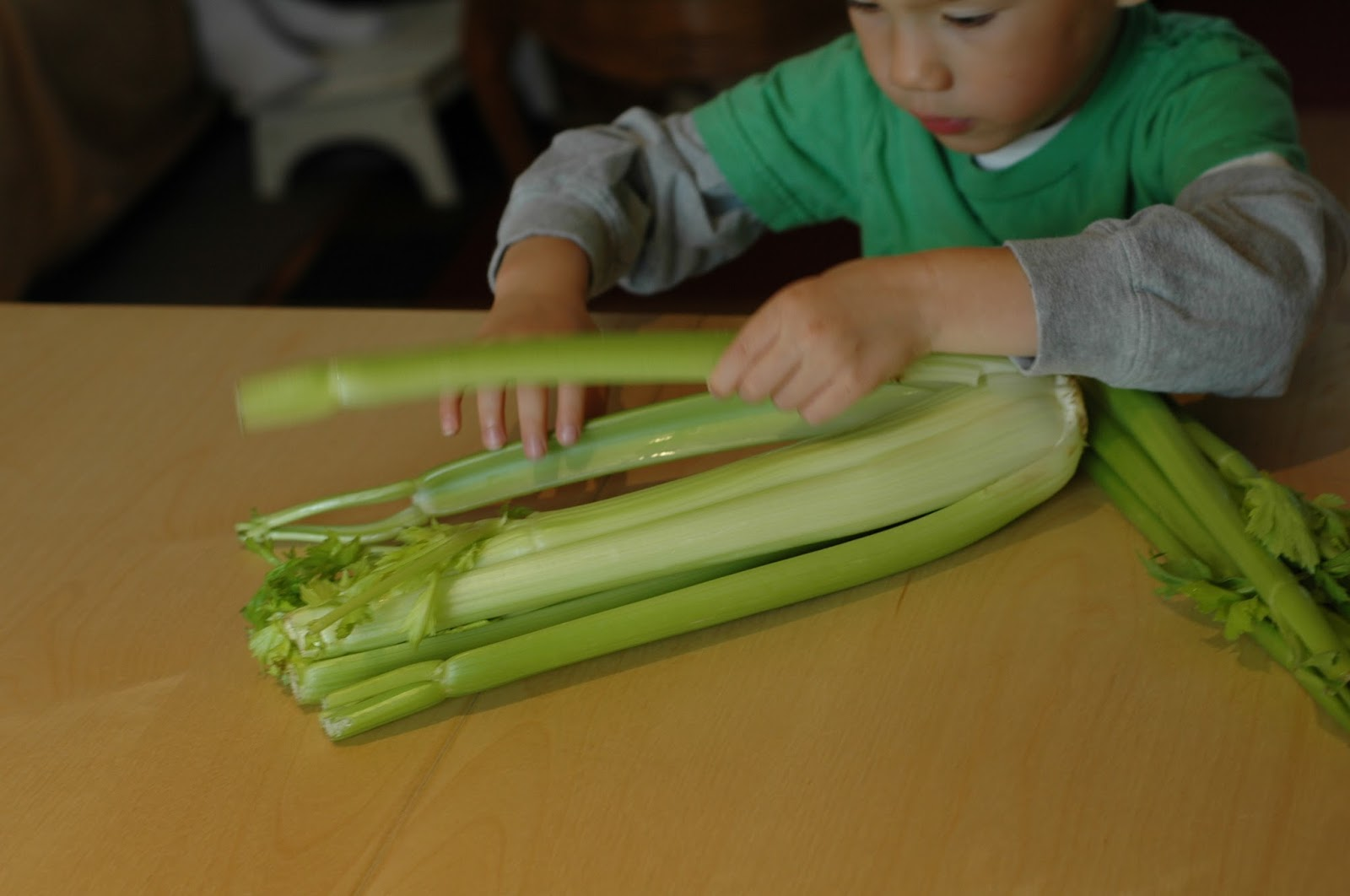 celery project Learn about capillary action with this simple and colorful rainbow celery experiment and craft.