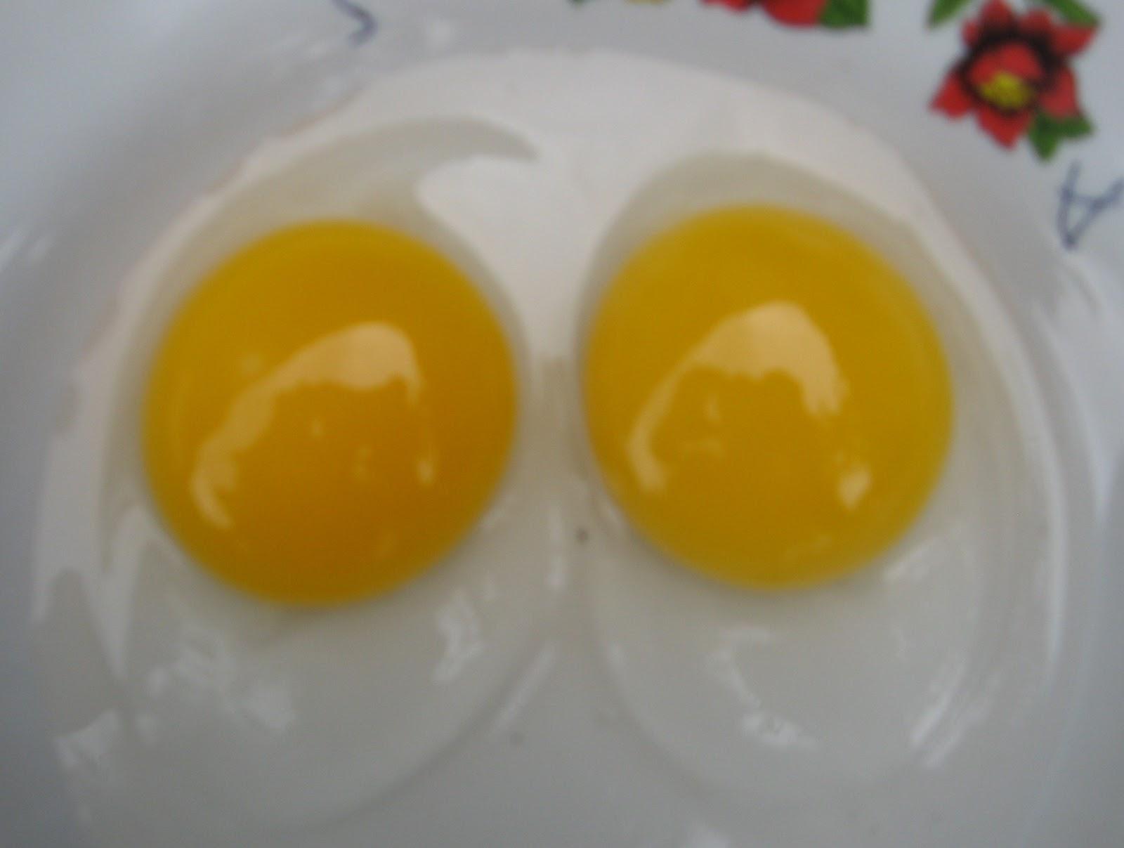 vitamin untuk anak ayam