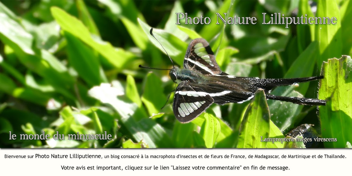 Photo Nature Lilliputienne (macrophotographies)
