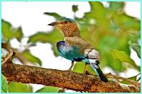 Navegaon National Park Nagpur