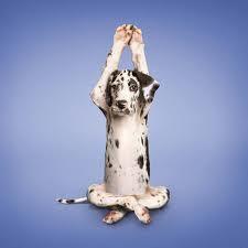 anulom vilom yoga