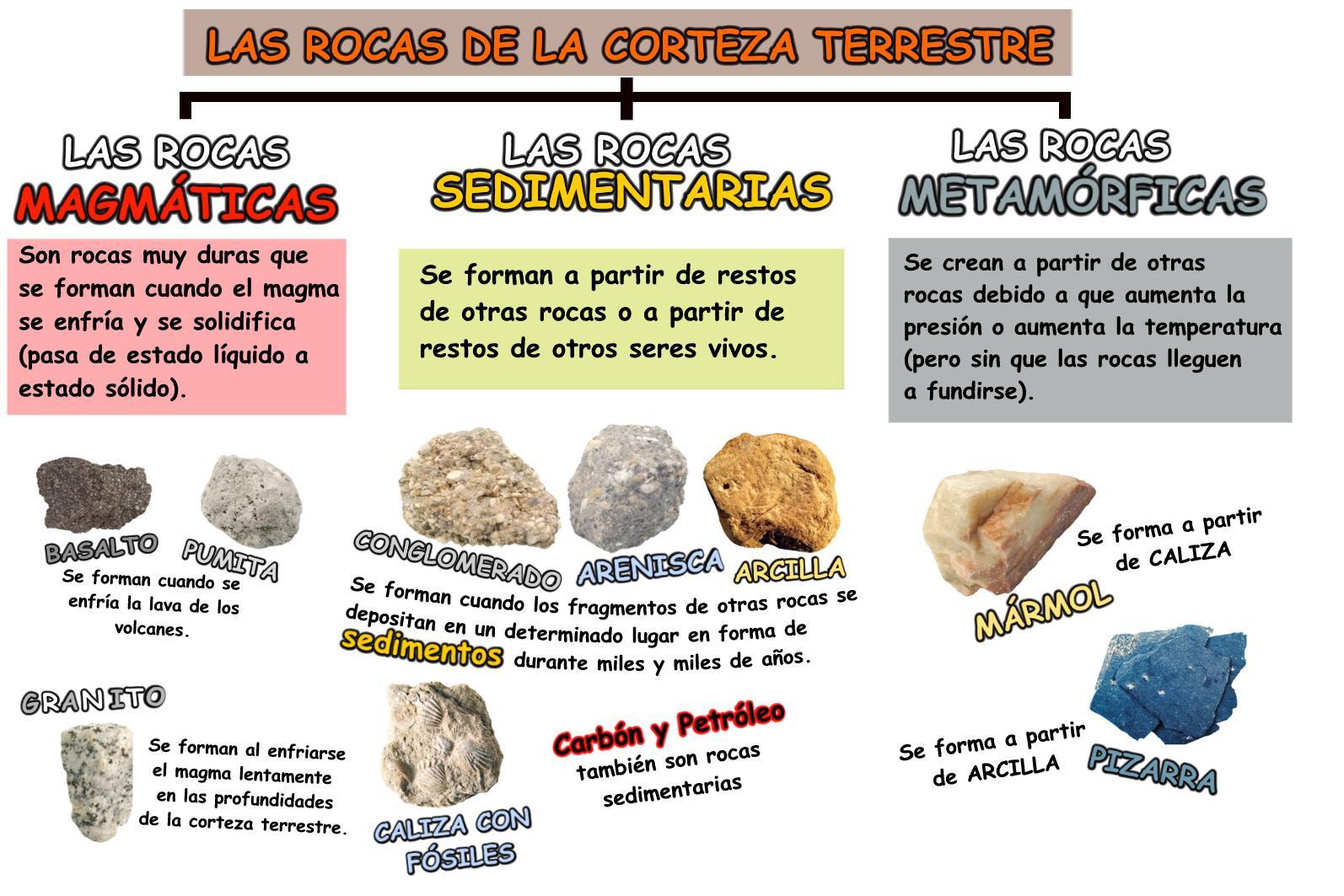 Tipos de rocas sus caracteristicas y los fosiles tipos for Tipos de arboles y caracteristicas