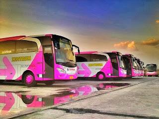 Pink Trans Zentrum Jetbus