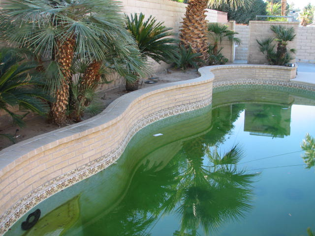 Dr debbie are there mosquitoes in las vegas you can bet on it for Can mosquitoes breed in swimming pools