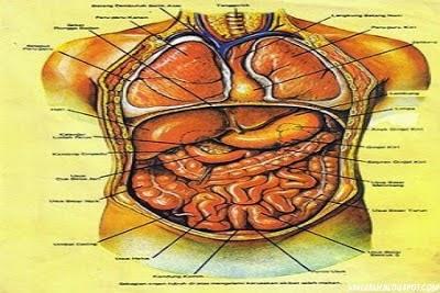 http://asalasah.blogspot.com/2014/11/apa-itu-anatomi-berikut-pengertiannya.html