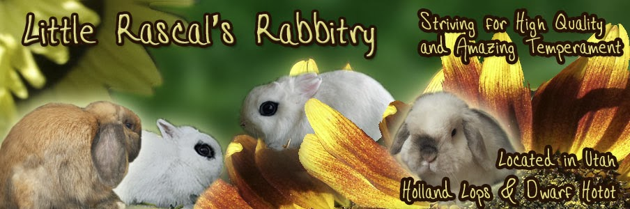 Little Rascal's Rabbitry