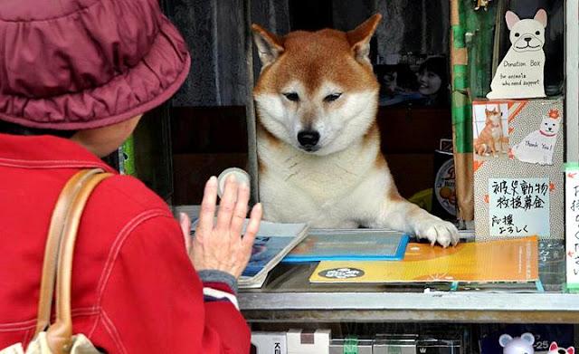 Perro trabajando en tienda de tabaco