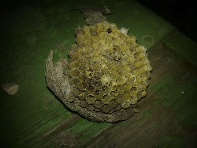 Осиное гнездо размеры изнутри
