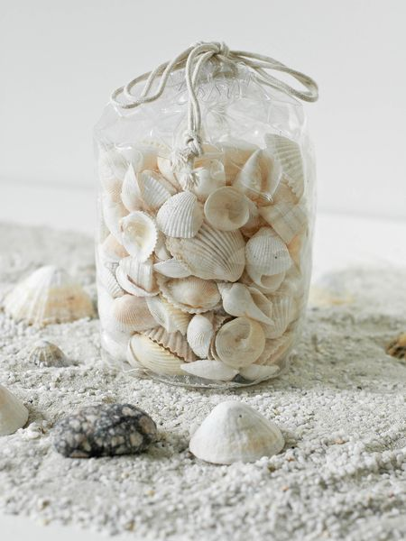 how to find big seashells