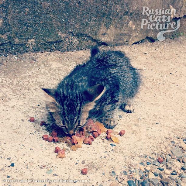 Instacats Eats Cat 02