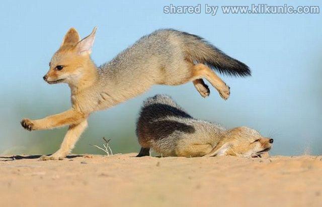http://3.bp.blogspot.com/-YTdxAEqKvDM/TXhN2Rh76TI/AAAAAAAAQjg/WMDsSWPlIlE/s1600/these_funny_animals_635_640_08.jpg