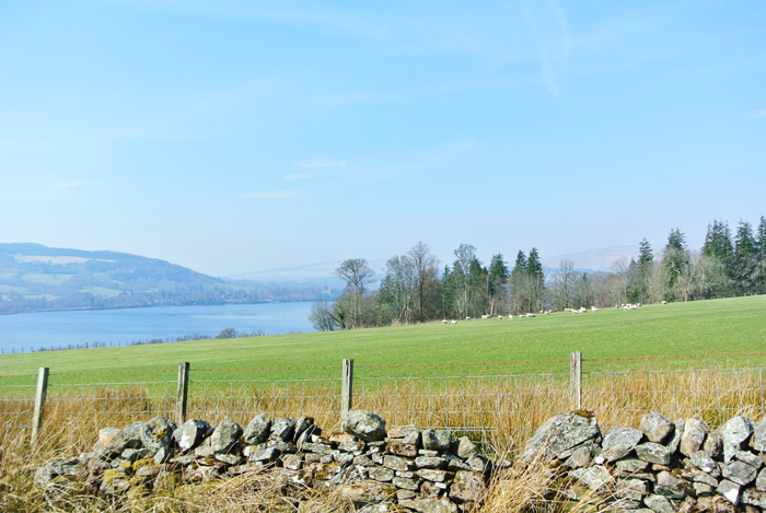 Sheep pasture near Loch Lomond