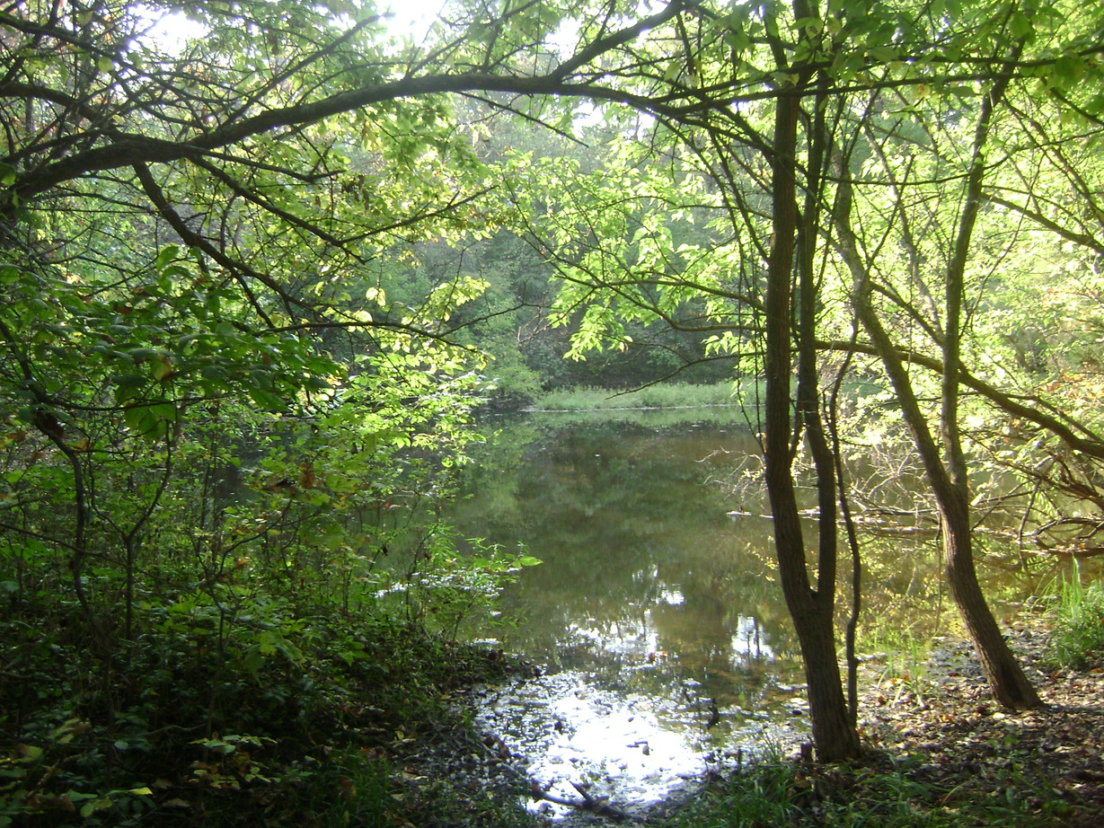 pond in a wood