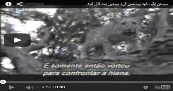 شاهد بالفيديو .. فهد يحتضن قرد صغير بعد قتل أمه سبحان الله !!