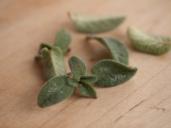 fresh sage (Salvia officinalis) for sage butter