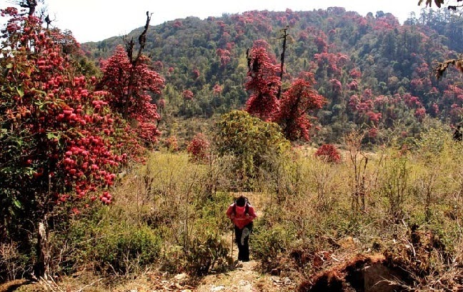 Sikkim Rhododendron Trek