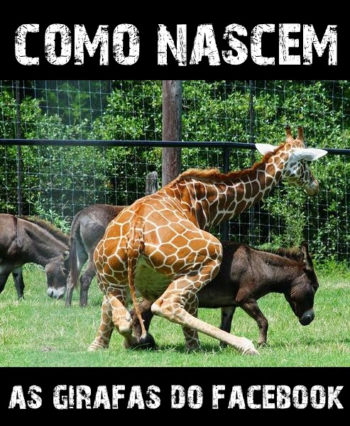 Girafas do Facebook em www.mineirasemfreio.com.br