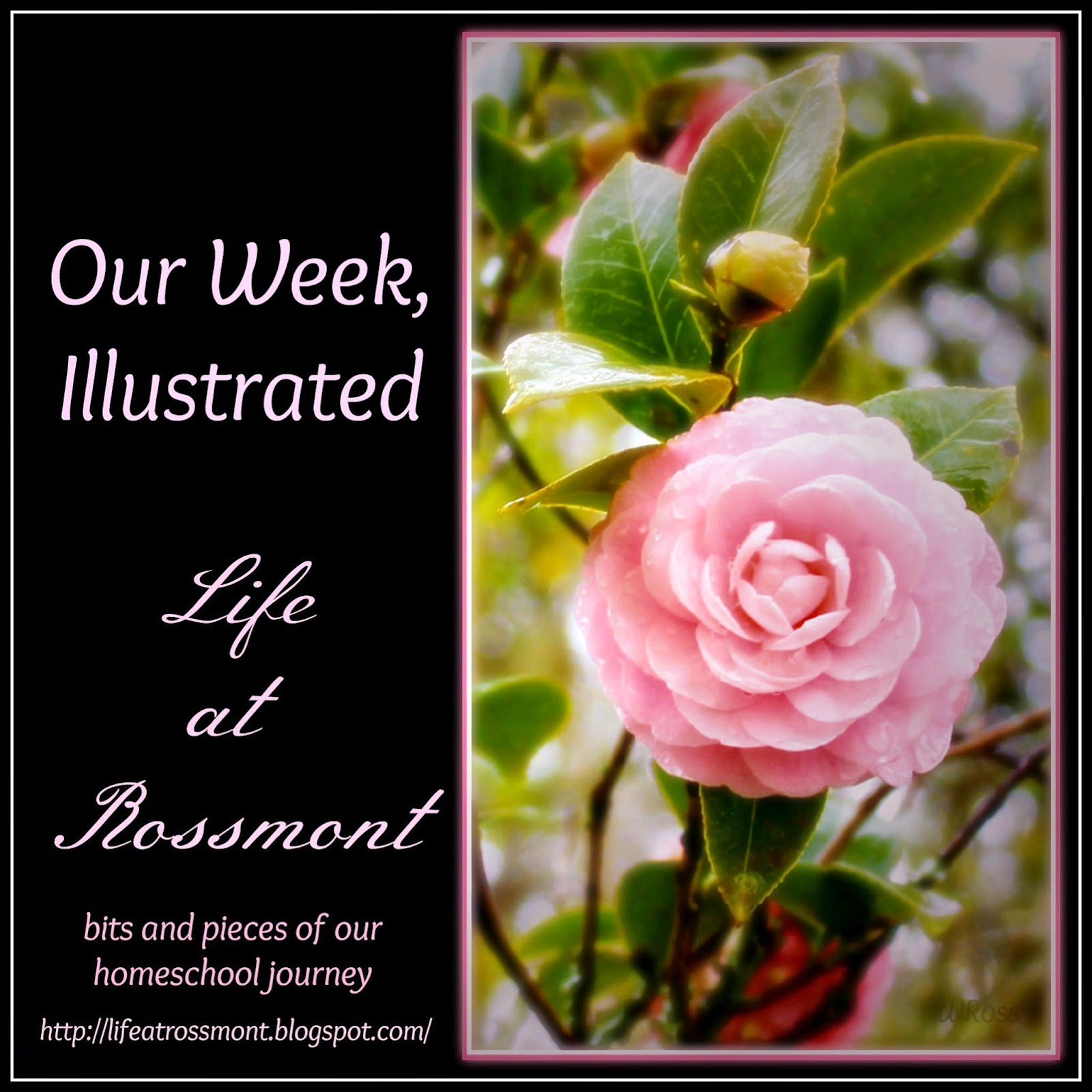 http://lifeatrossmont.blogspot.com/2015/05/our-week-illustrated-april-26-may-2.html