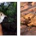 Programa de Monitoramento de Fauna Silvestre é realizado pela primeira vez na BR-235/BA