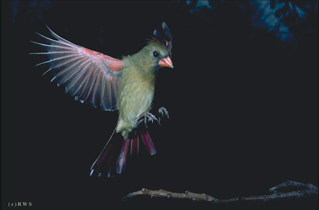 நான் பார்த்து ரசித்த புகைப்படங்கள் சில.... - Page 2 Flying+Birds+%25286%2529