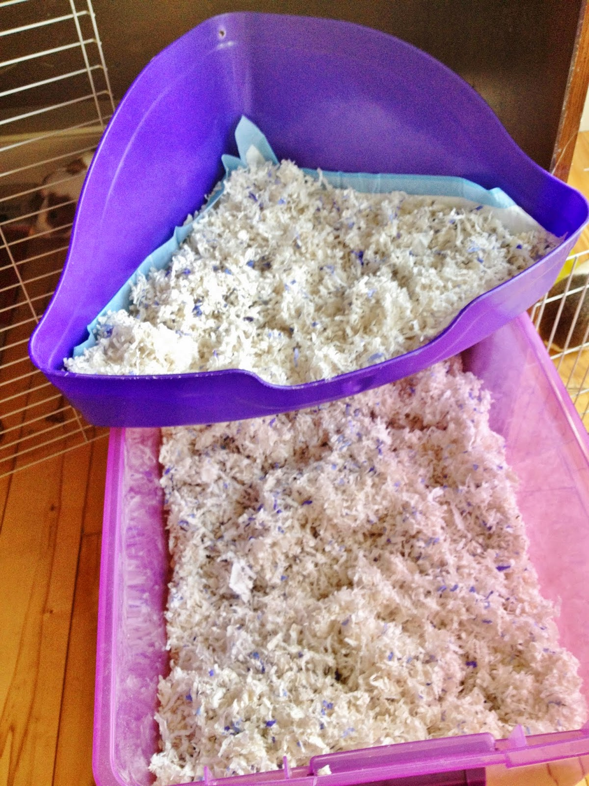 Fill corner potty with absorbent litter material. This is a mix of Kaytee Clean & Cozy Small Animal bedding in Lavender and Original.
