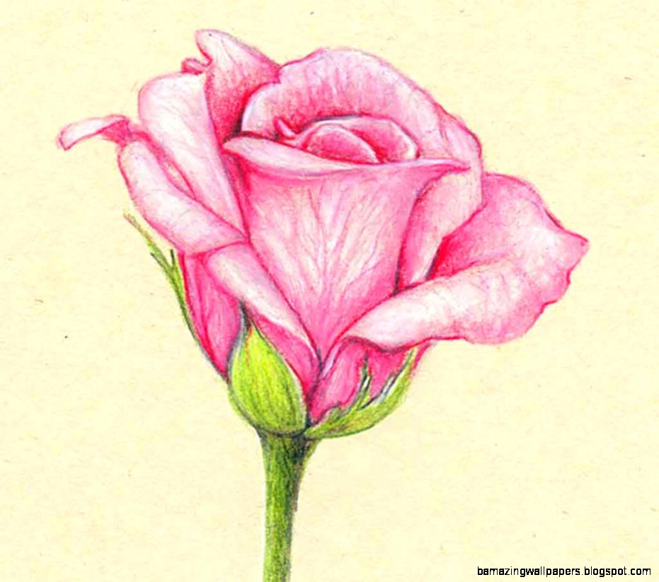 flower drawings with color easy amazing wallpapers