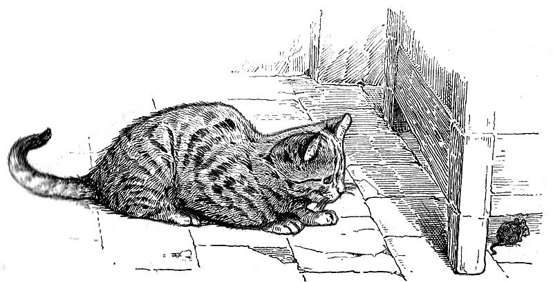 imagen de raton y gato para imprimir