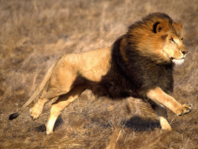 The Top Ten Quickest/Fastest Animals on the Planet