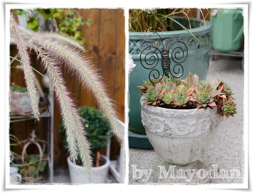herbst im wintergarten mayodans home garden crafts. Black Bedroom Furniture Sets. Home Design Ideas