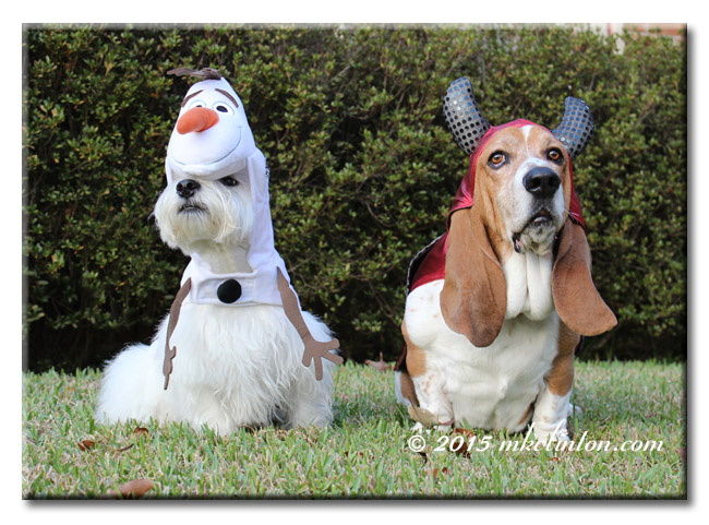 Pierre Westie and Bentley Basset in Olaf and devil costumes