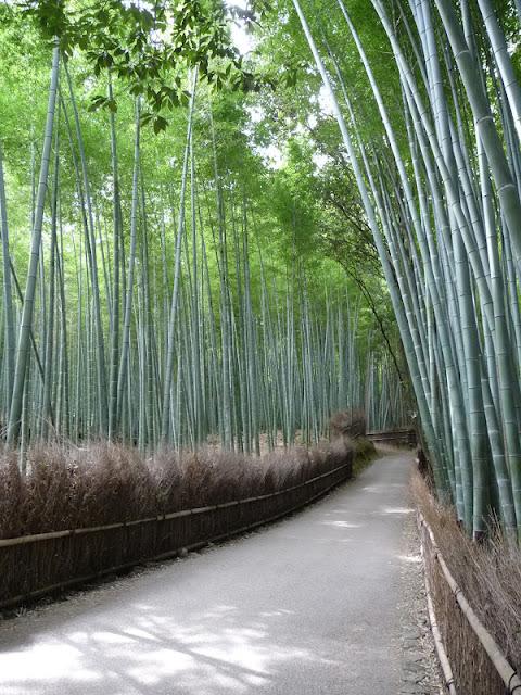 rideau de bambous