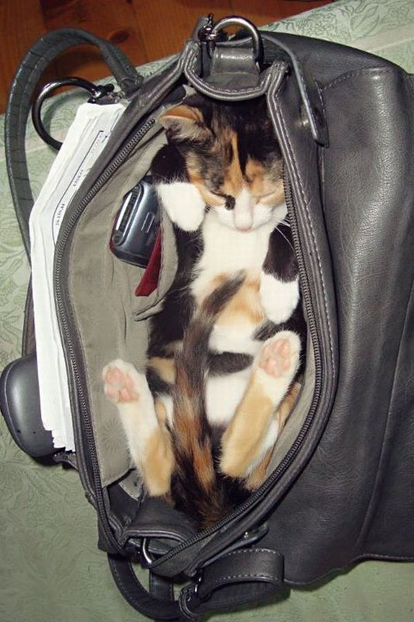 funny cats pictures, kitten in bag