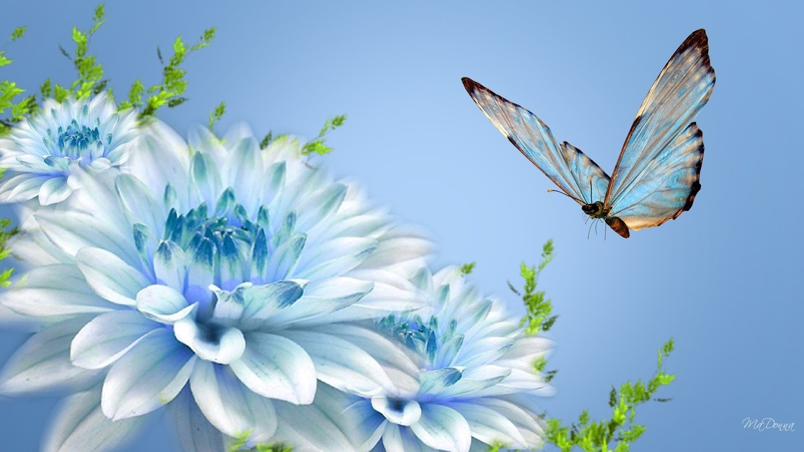 Blue butterfly and blue flower