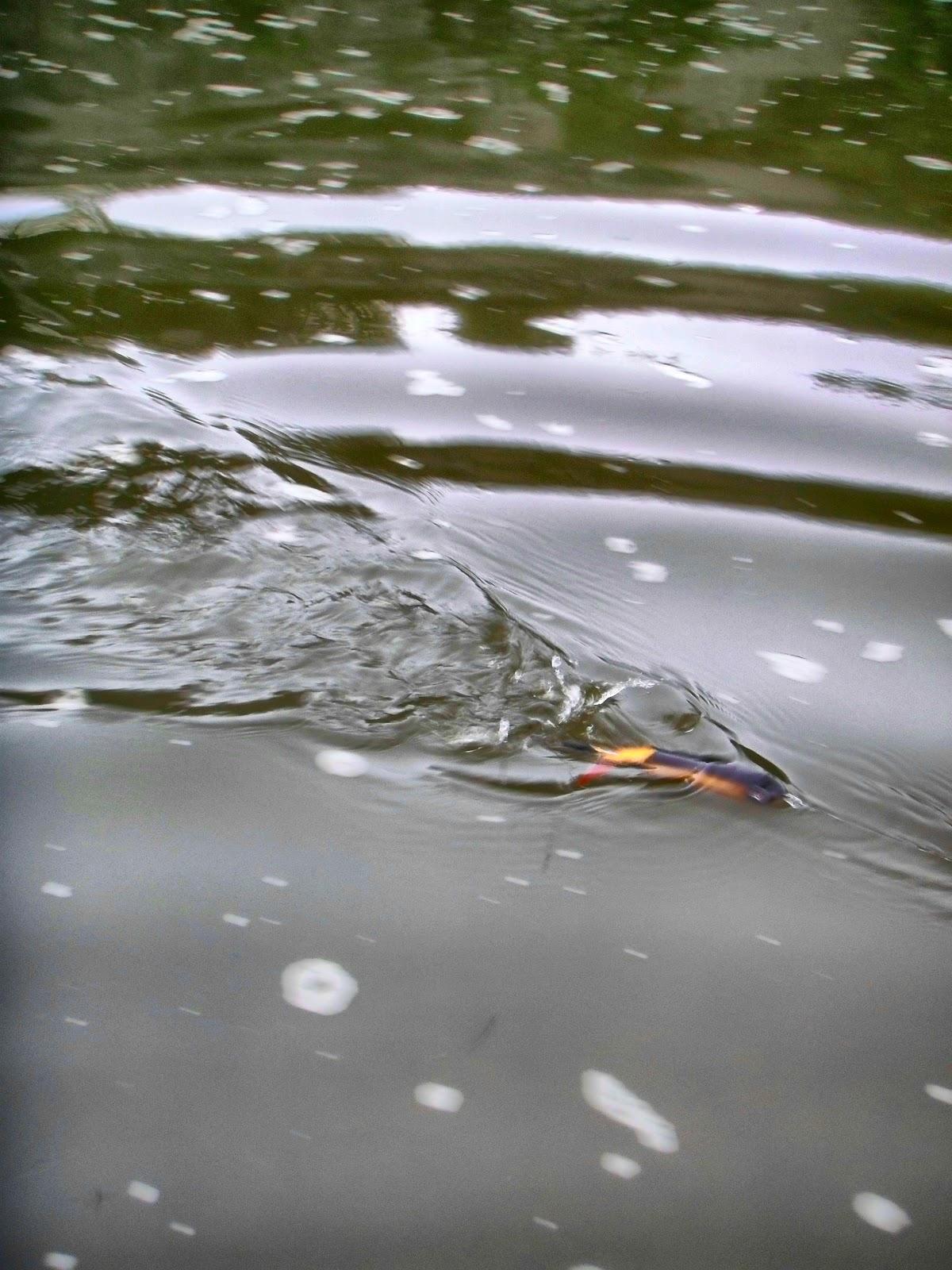 Ohio fishing source bloop bloop bloop for Buy ohio fishing license
