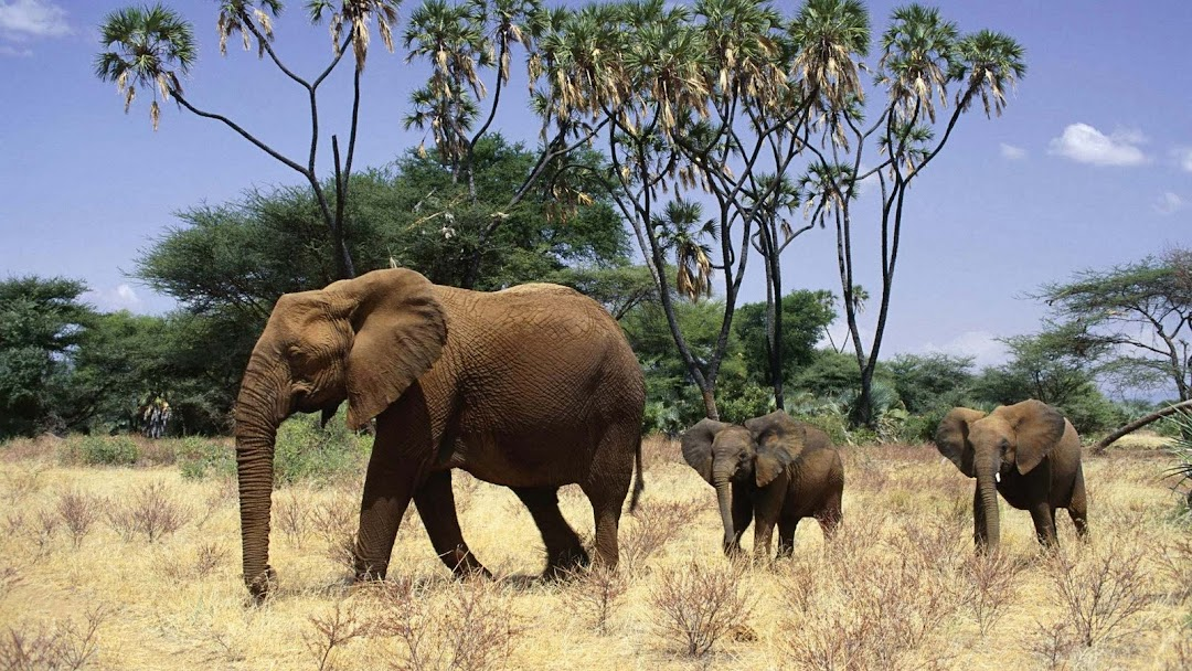 Elephant HD Wallpaper 15