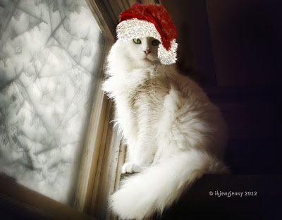White cat wearing Santa Hat
