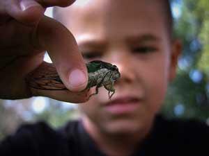 proyecto insectos y otros bichos