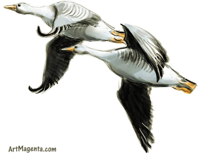 Bean Goose sketch painting. Bird art drawing by illustrator Artmagenta.