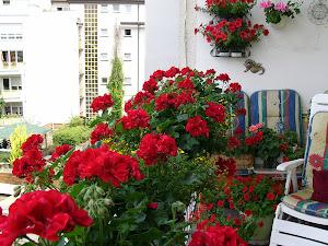 Geranien auf meinem Balkon