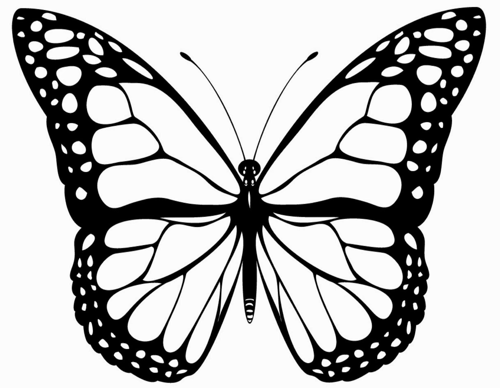 free butterfly diagram coloring pages